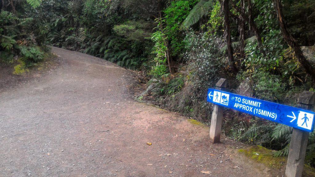 タウランガハイキング