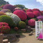 一つのミスから生まれたツツジの名所、長野県岡谷市にある鶴峯公園に行ってきました