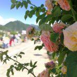 華麗なる2500株のバラが咲き誇る「信州なかのバラまつり」に行ってきた。